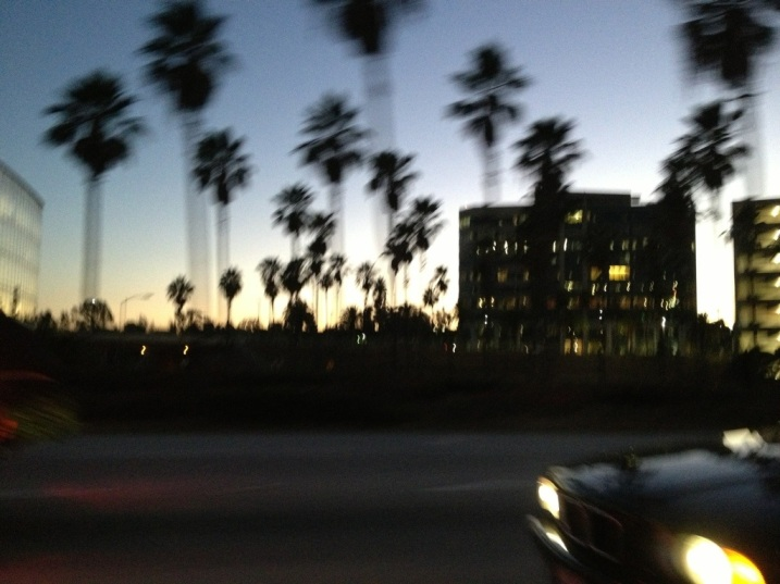 Palm trees at speed!
