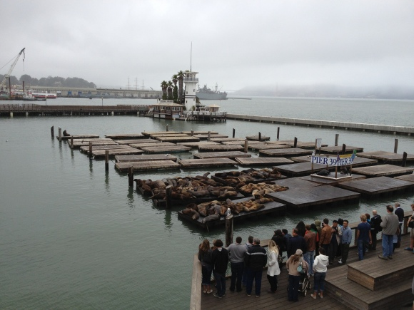 The sea-lions on Pier 39...